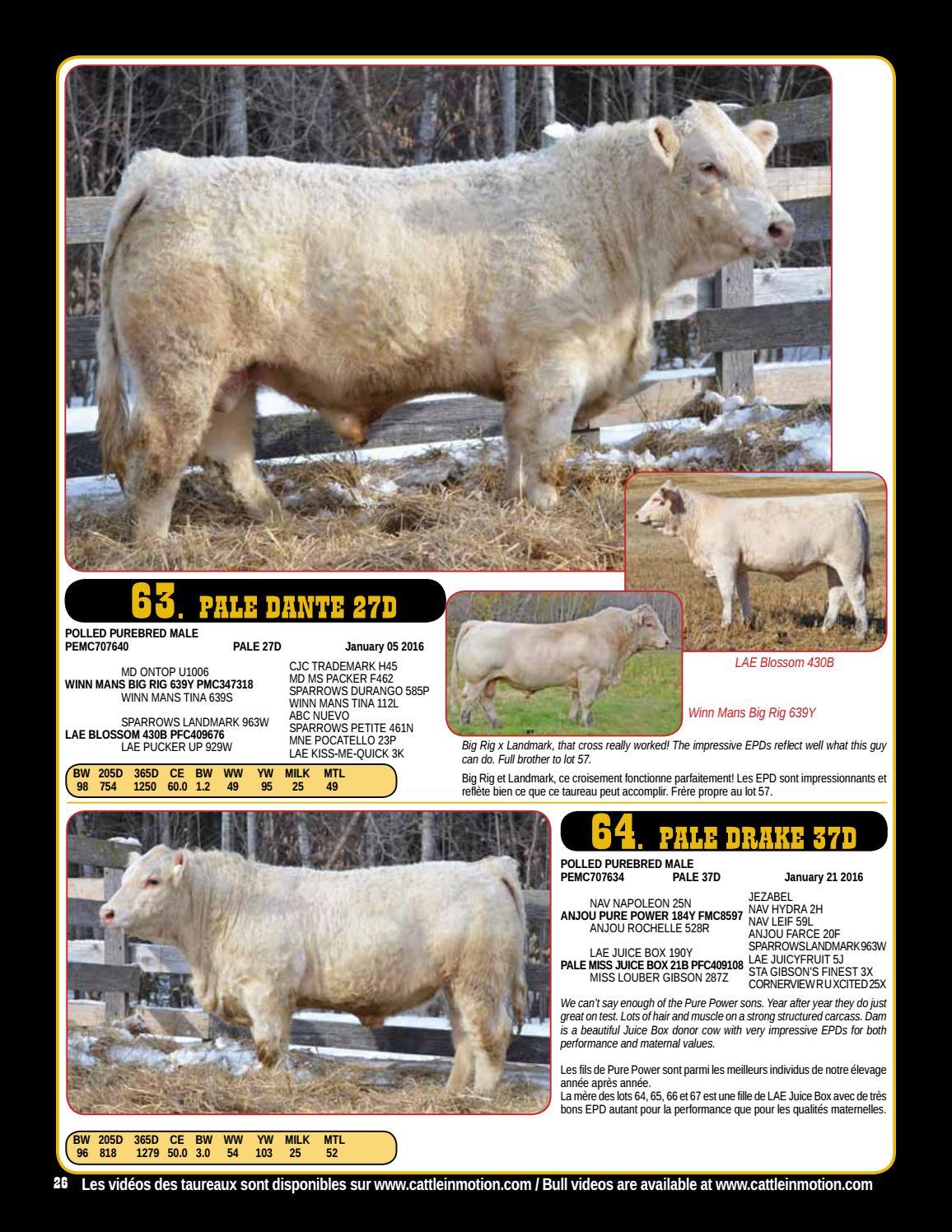 Ferme Gagnon 18th Annual Bull Sale by Bohrson Marketing Services Ltd ...