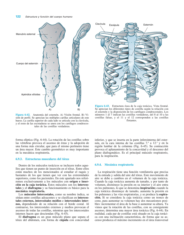 Estructura Y Funcion Del Cuerpo Humano By Rosselyn Gualdron