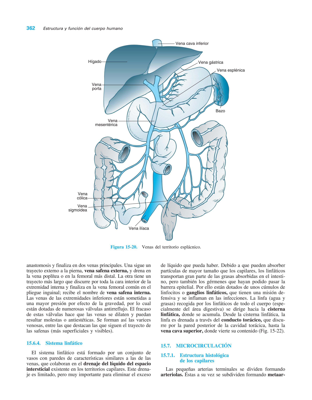 venas principales que drenan las extremidades inferiores