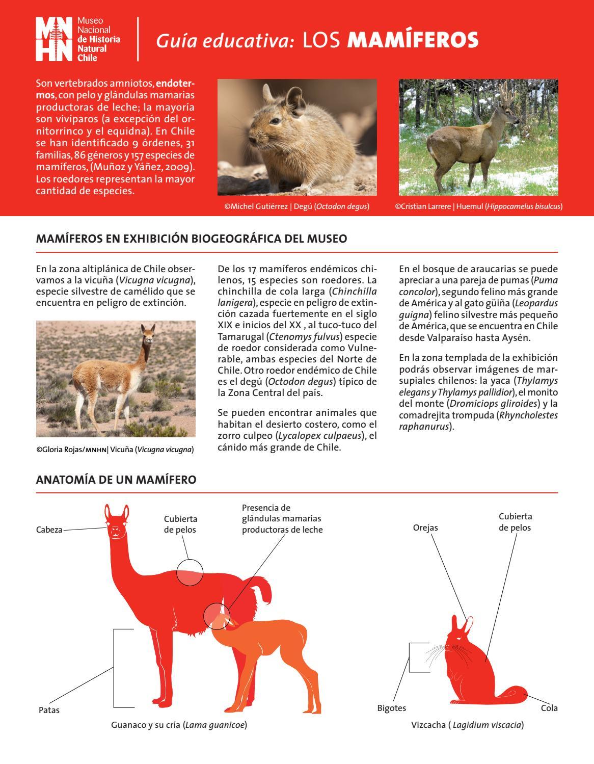 Mamiferos by Museo Nacional de Historia Natural - issuu
