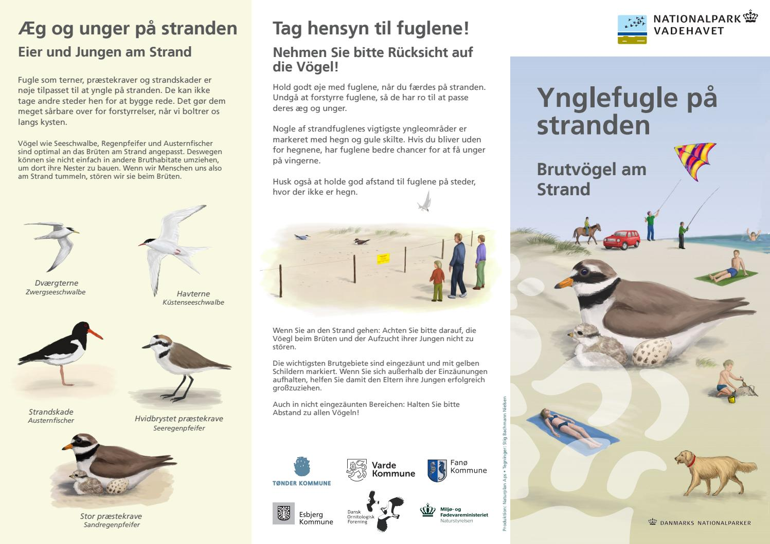 ynglefugle på stranden by nationalpark vadehavet - issuu