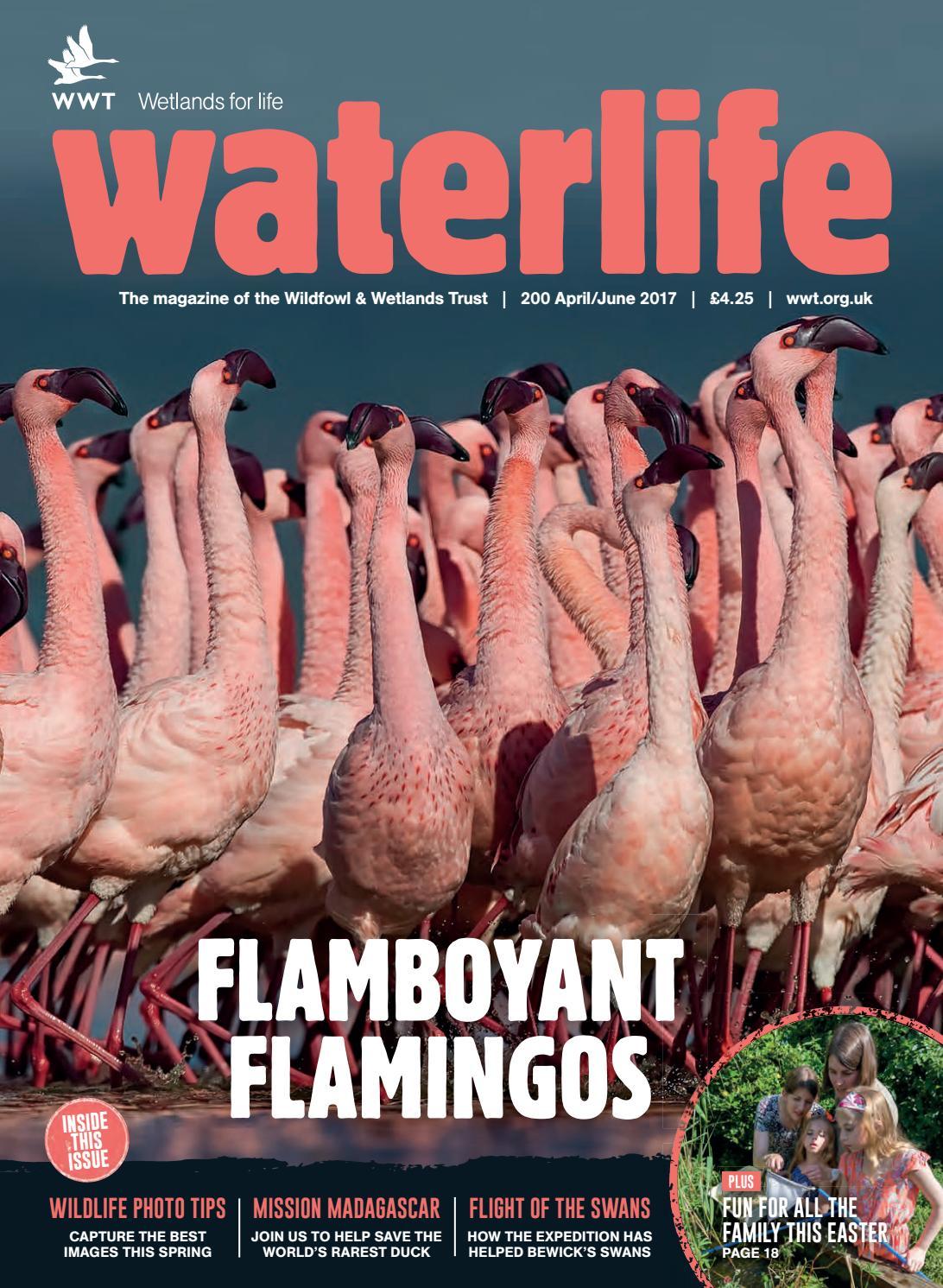 Waterlife April–June 2017 by WWT Waterlife - issuu