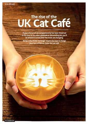 Page 10 of The Rise of the UK Cat Cafe