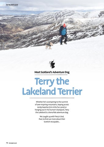 Page 14 of Meet Terry the Lakeland Terrier