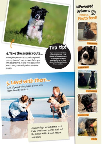 Page 23 of Mastering the Art of Pet Photography