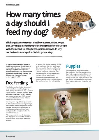 Page 6 of How Many Times a Day Should I Feed My Dog?