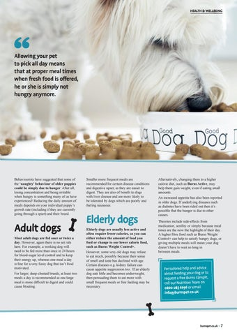 Page 7 of How Many Times a Day Should I Feed My Dog?