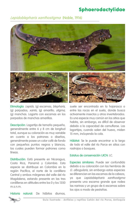 Guia ilustrada Anfibios y Reptiles cañón del rio Porce - Antioquia ...