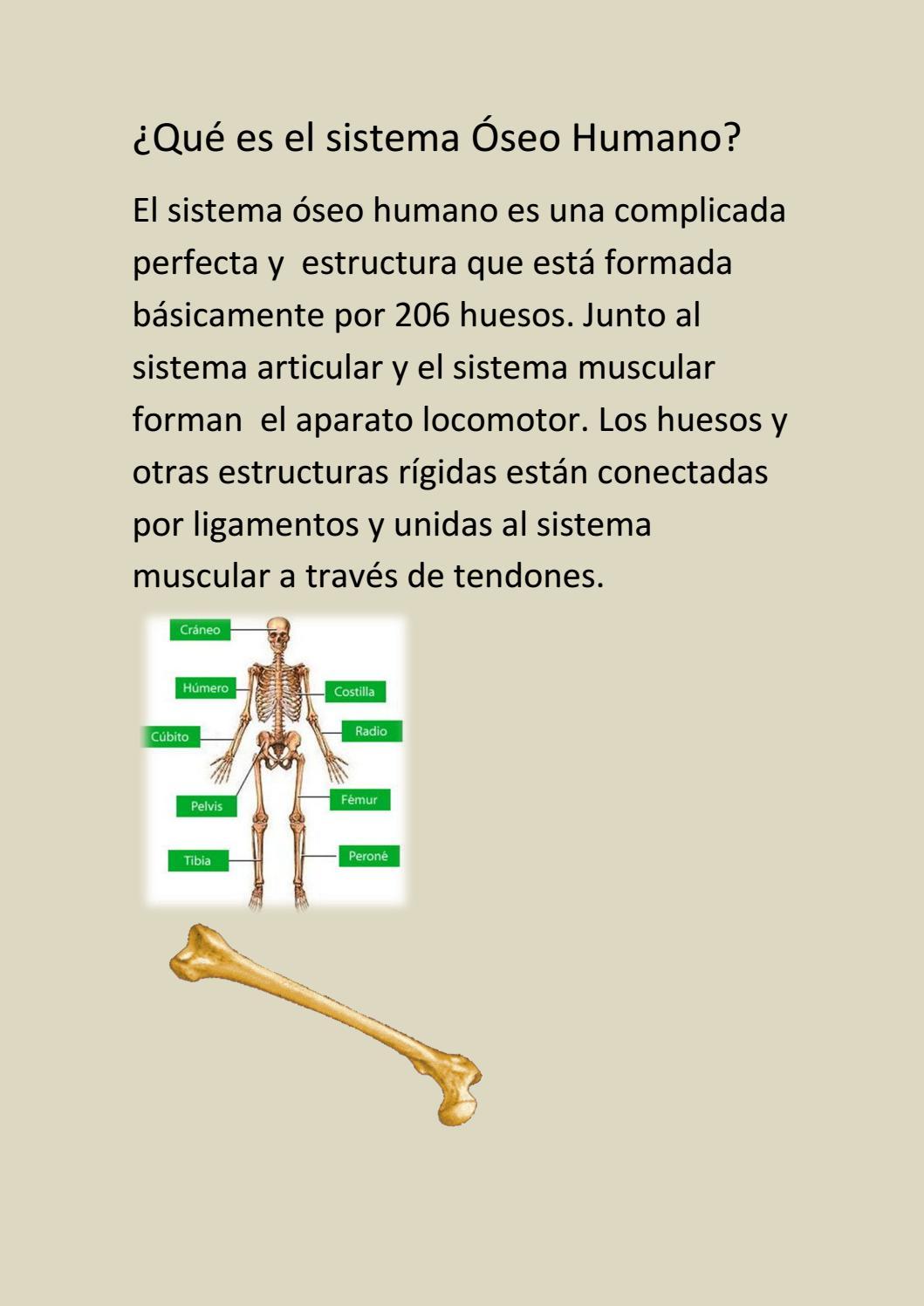 Introdução à biologia do sistema musculoesquelético ...