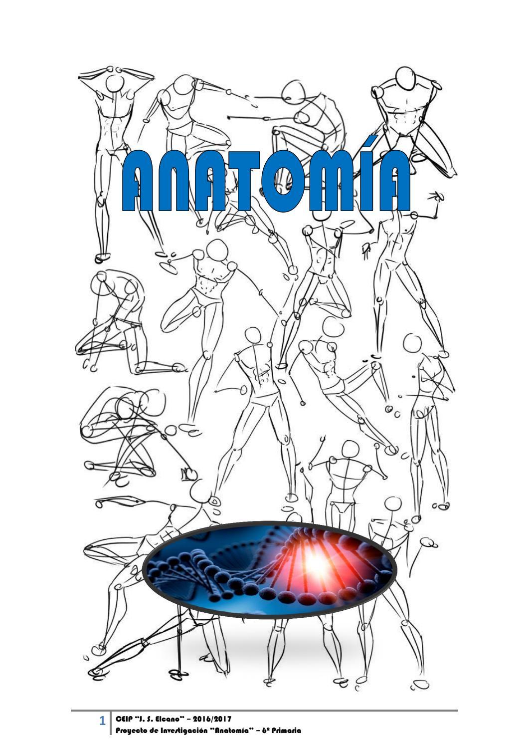 Dossier completo anatomía 16 17 by ELKANO - issuu