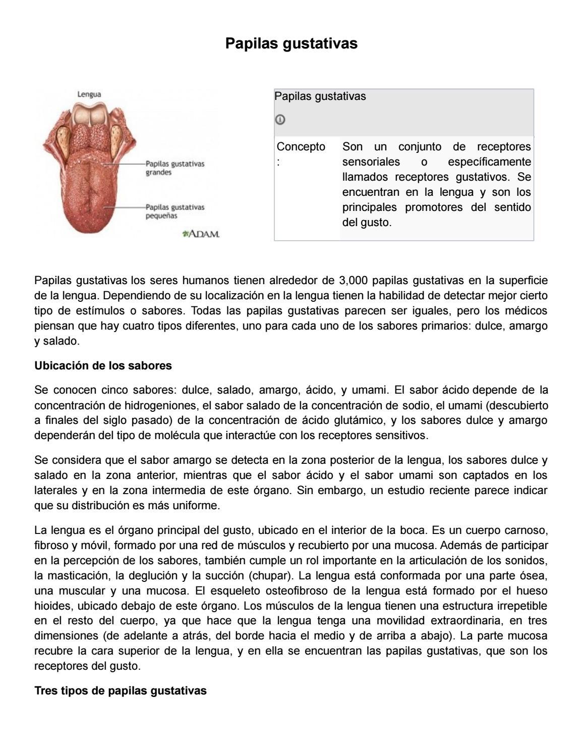 Papilas gustativas by Mishell Rubio - issuu
