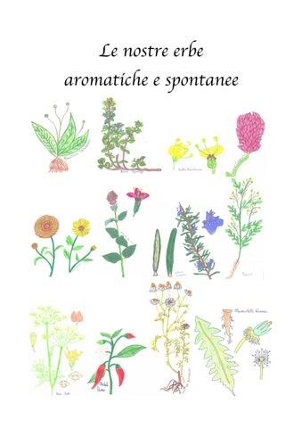 Le nostre erbe aromatiche e spontanee by lydia paccamiccio for Salvia da colorare