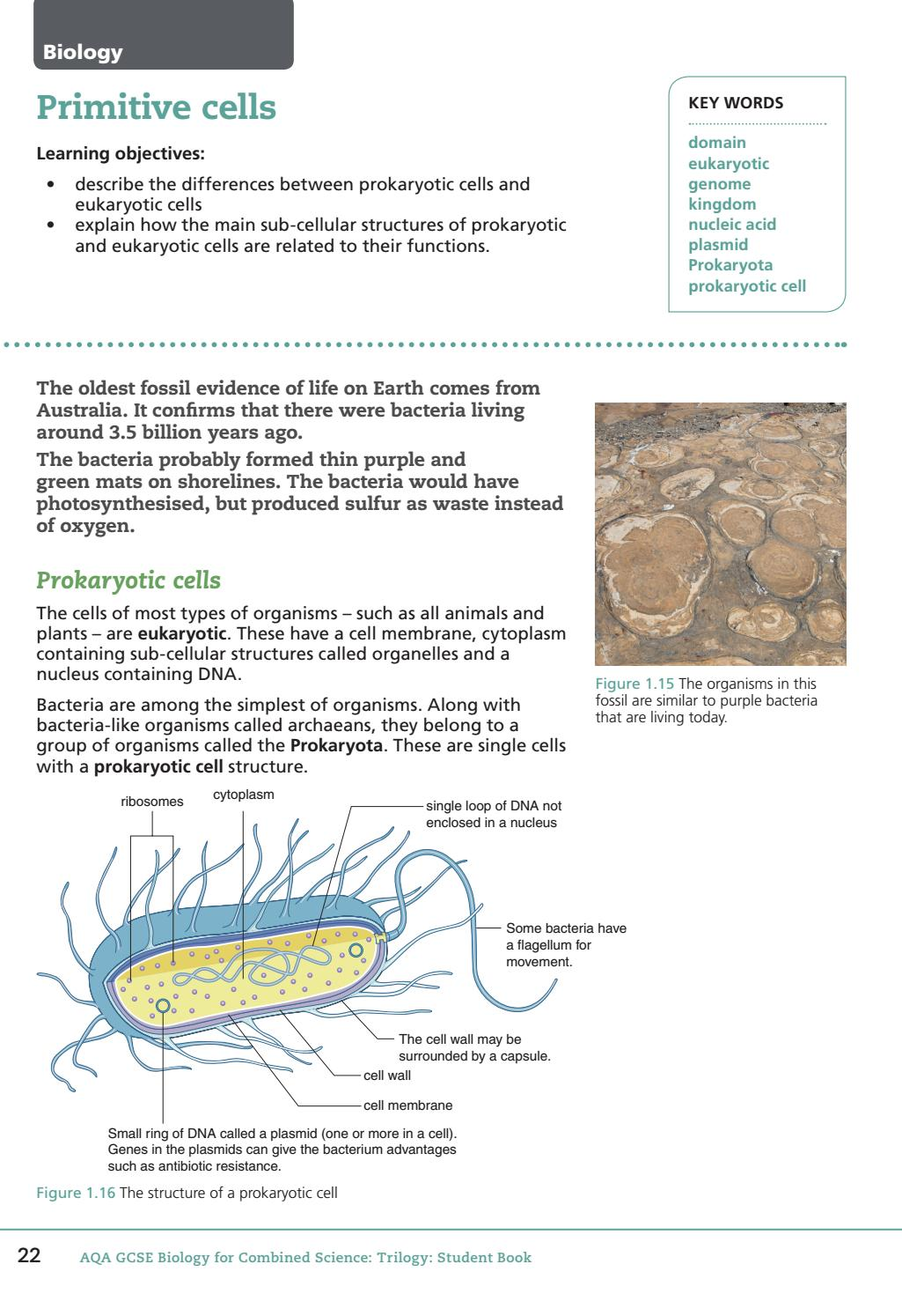 Aqa Gcse Biology For Combined Science Student Book Sample Chapter By Prokaryotic Cells Collins Issuu