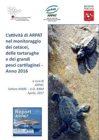 Monitoraggio cetacei tartarughe e grandi pesci for Tartarughe grandi