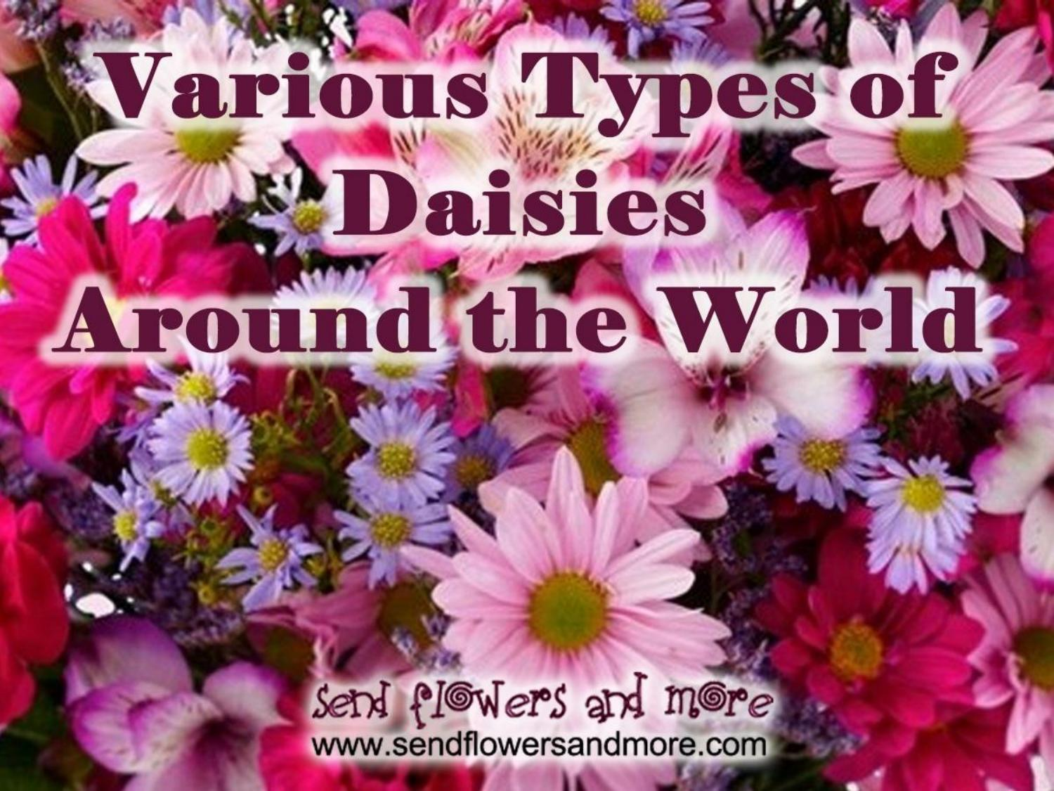 Various types of daisies around the world by celinewilson issuu izmirmasajfo