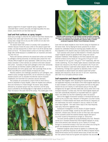 upper canopy tree cover in cocoa Timber species at 6-7 trees in the mid to upper canopy (10m) per hectare  did  not find any farmers growing cocoa under natural forest cover.