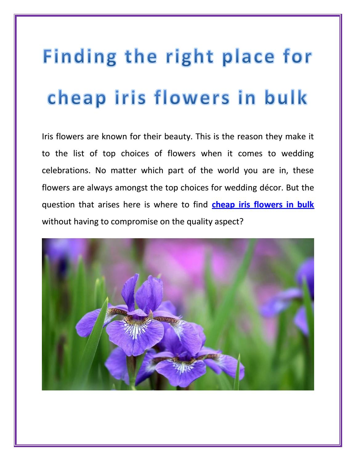 Finding the right place for cheap iris flowers in bulk by www finding the right place for cheap iris flowers in bulk by wholeblossoms issuu izmirmasajfo