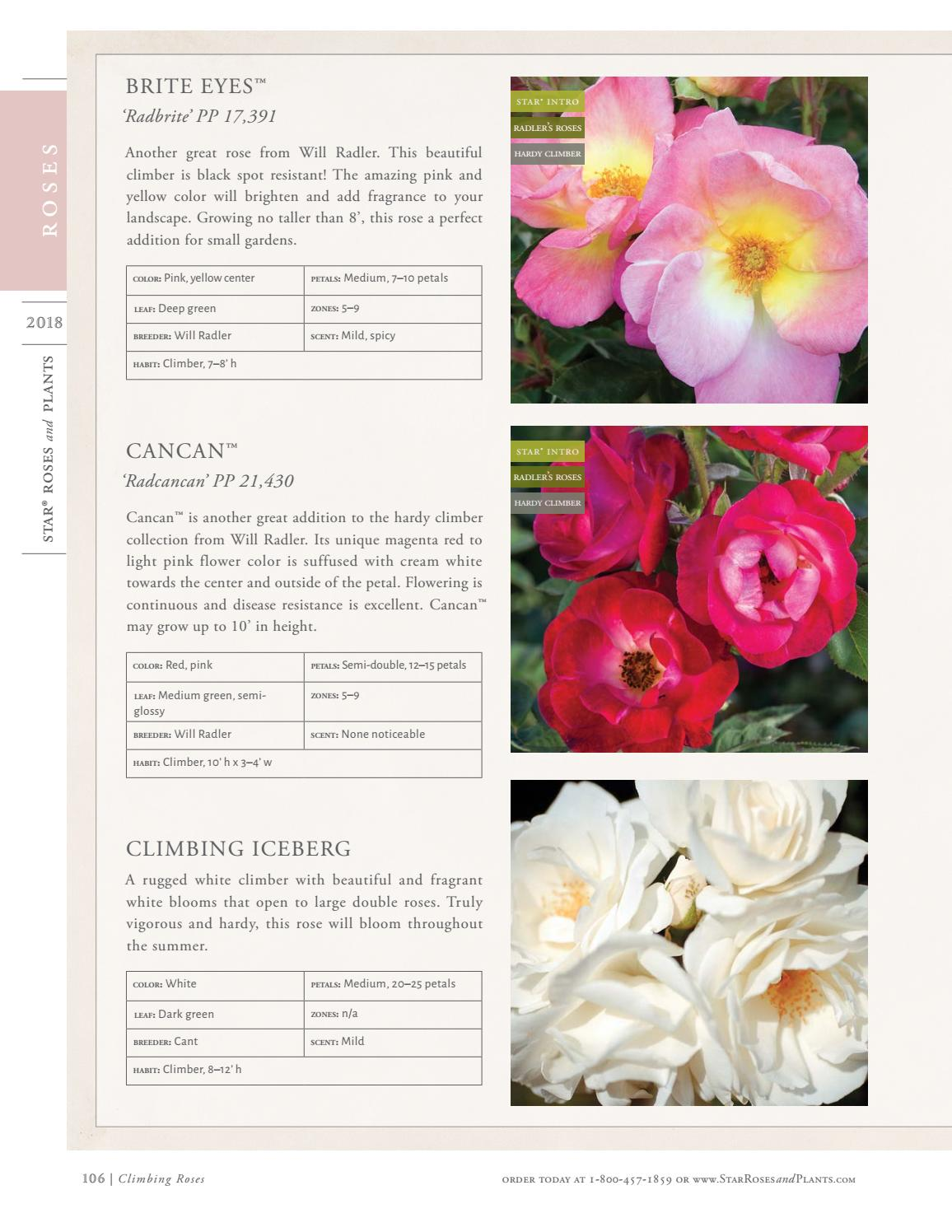 2018 Star Roses And Plants Catalog By Star Roses And Plants Issuu