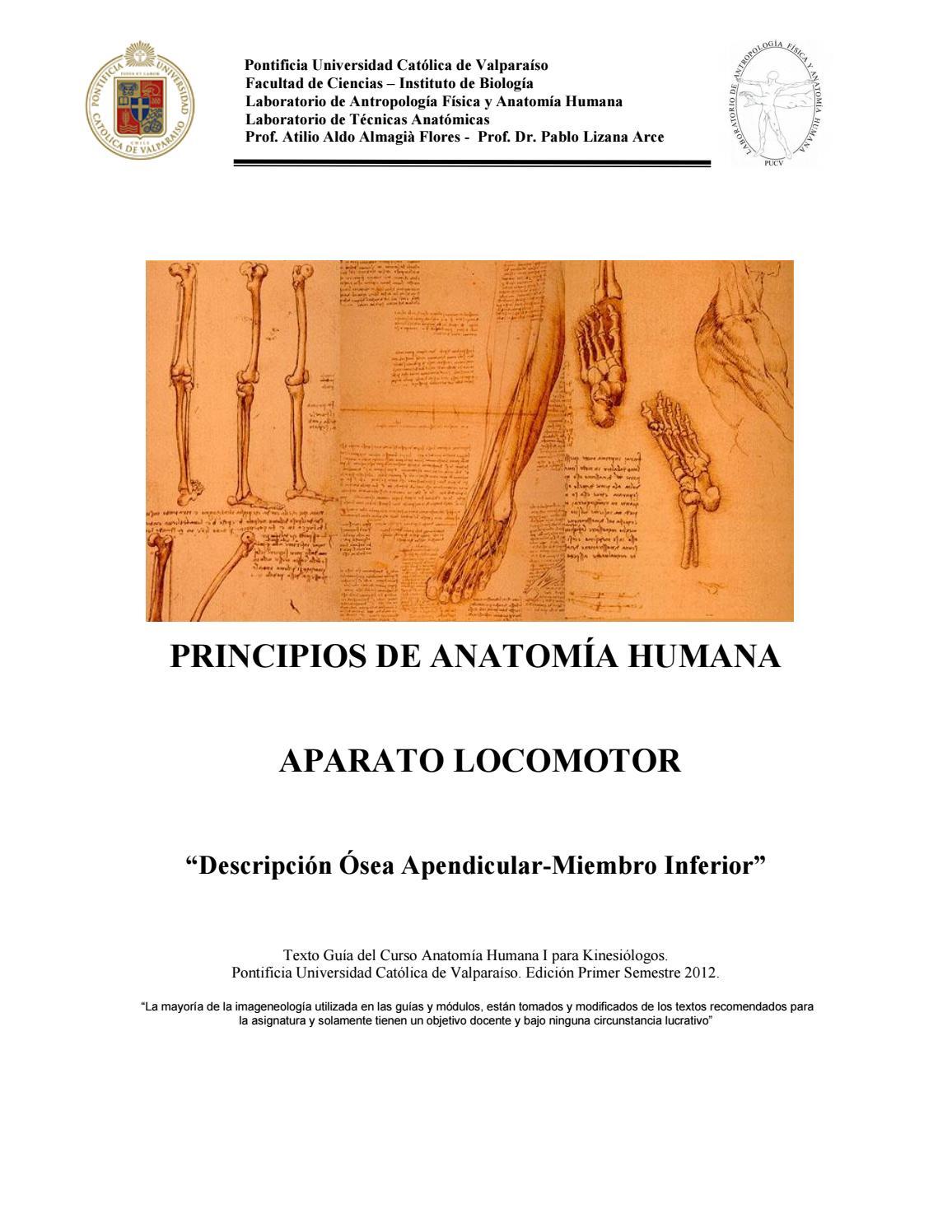 Osteologia miembro inferior kine 2012 by Lissy Féliz Vásquez - issuu