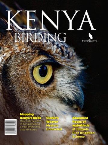 Kenya Birding Issue 7 By Nature Kenya Publications Issuu