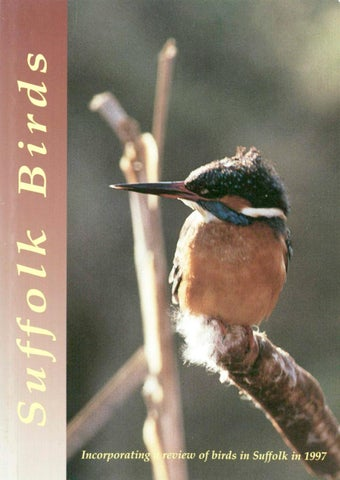197af3a262d9b5 Suffolk Birds 1997 by Suffolk Naturalists  Society - issuu
