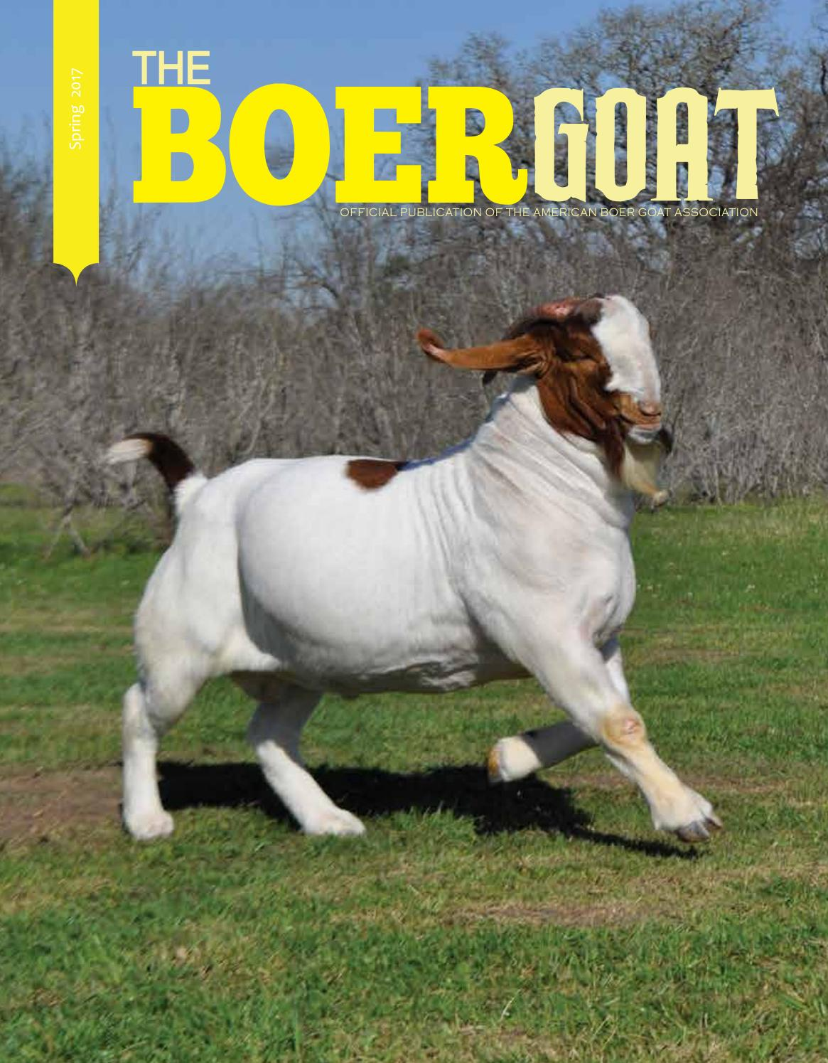 The Boer Goat Spring Edition by American Boer Goat ... - photo#50