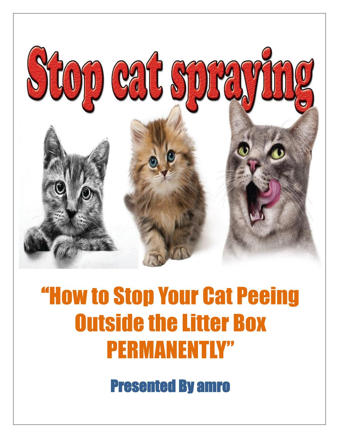 How To Stop Your Cat Spraying