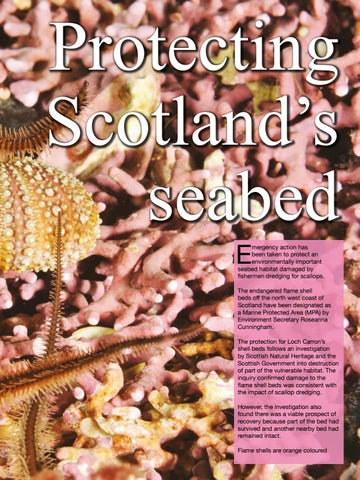 Page 75 of Protecting Scotland's seabed