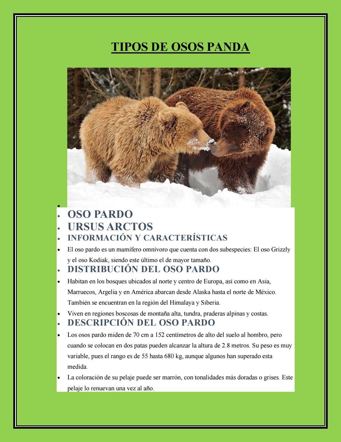 tipos de osos panda by victoria issuu