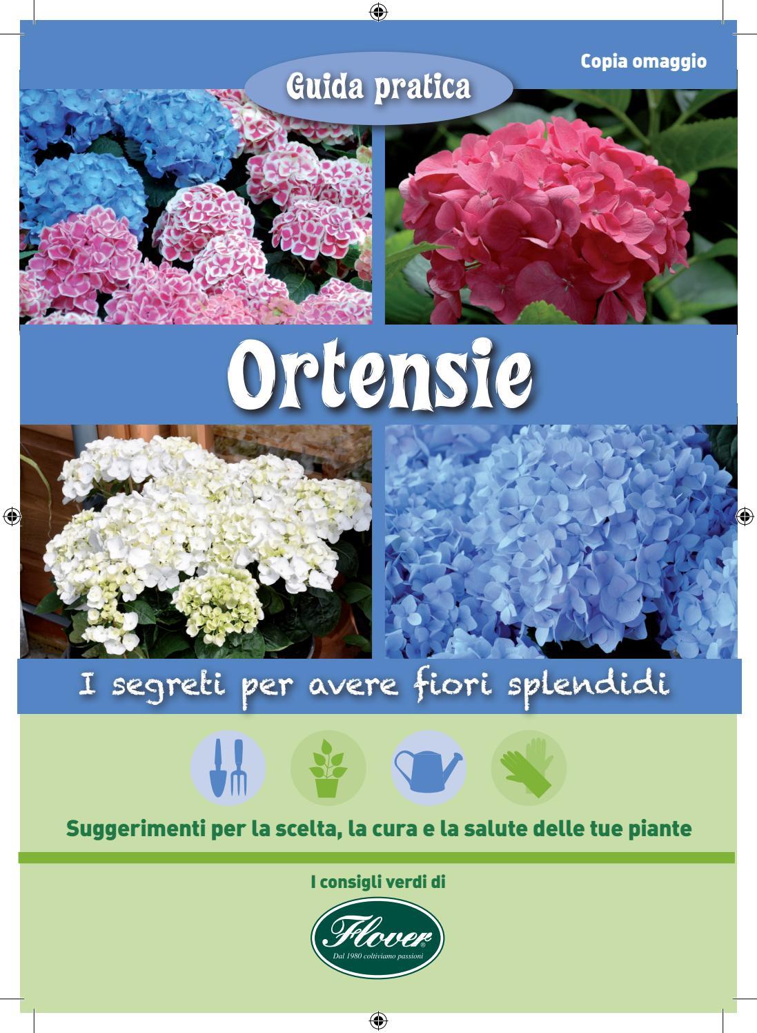 Ortensie Bianche Come Curarle ortensie - i segreti per avere fiori splendidi - flover by