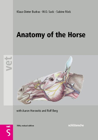 Anatomy of the horse by alarocha - issuu