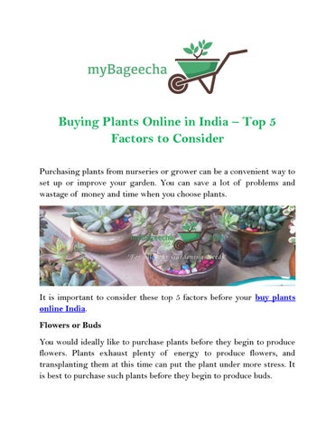 Ing Plants Online In India Top 5