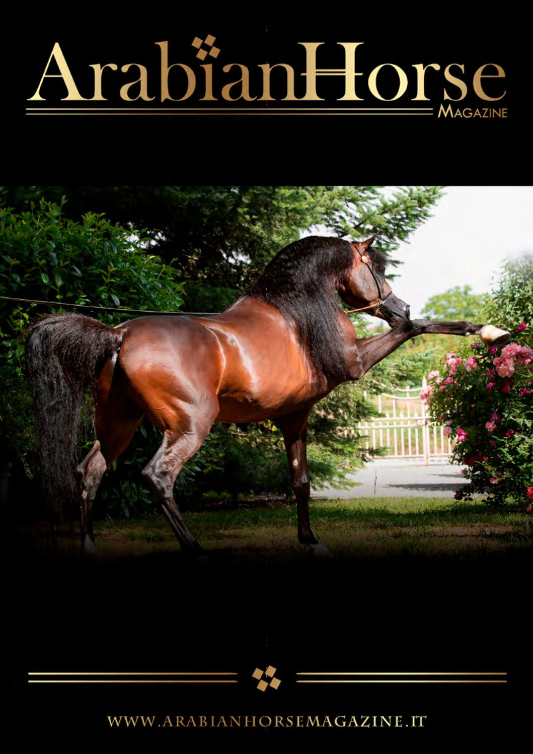 Arabian Horse Magazine | N_2 2017 by Arabian Horse Magazine - issuu
