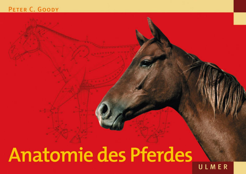 Ulmer verlag anatomie des pferdes (2004) by alarocha - issuu
