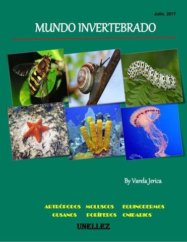 Mundo invertebrado by JERICA - issuu