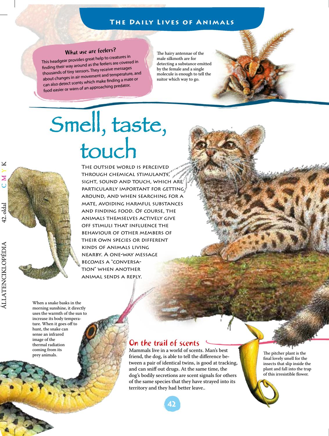 Illustrated Encyclopedia of Animals by Graph-Art Publishing - issuu