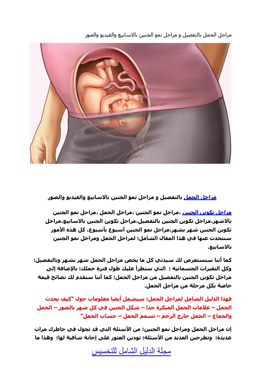مراحل تكوين الجنين بالصور 0