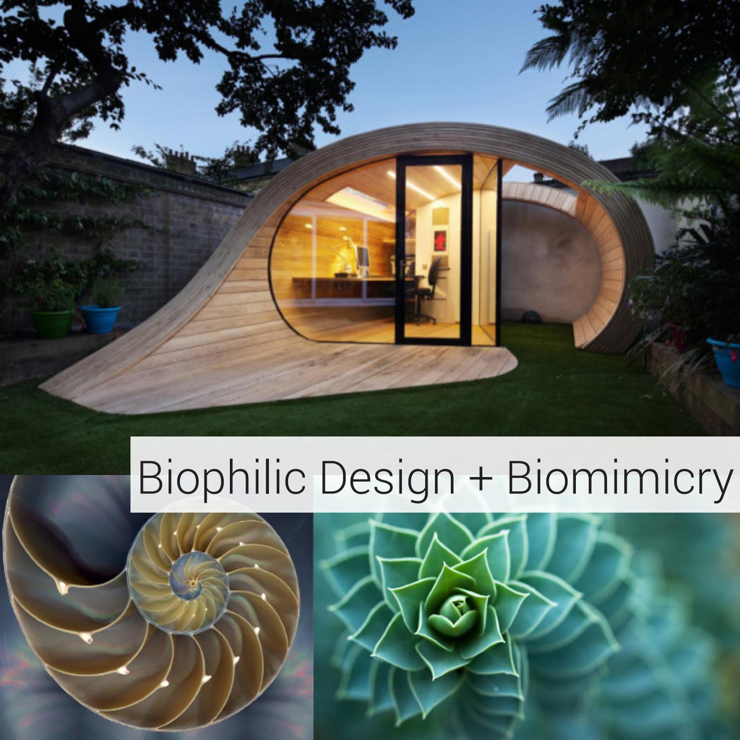 Biophilic Design Biomimicry By Shelby Burnett Issuu