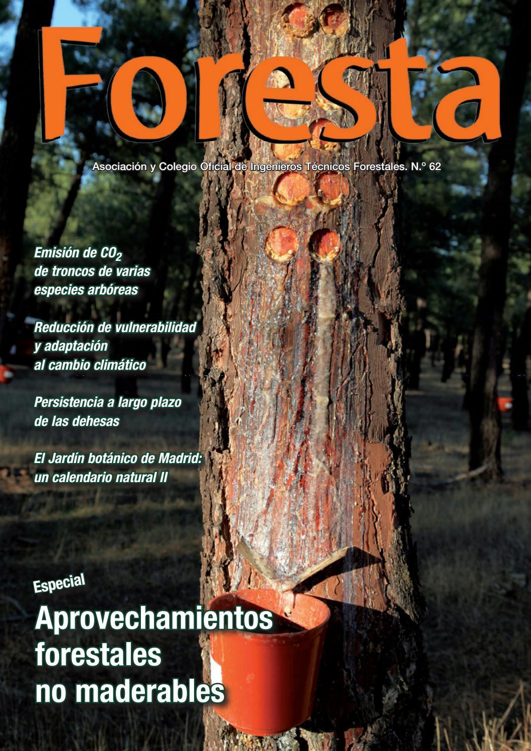 Revista Foresta nº 62 by Foresta - issuu