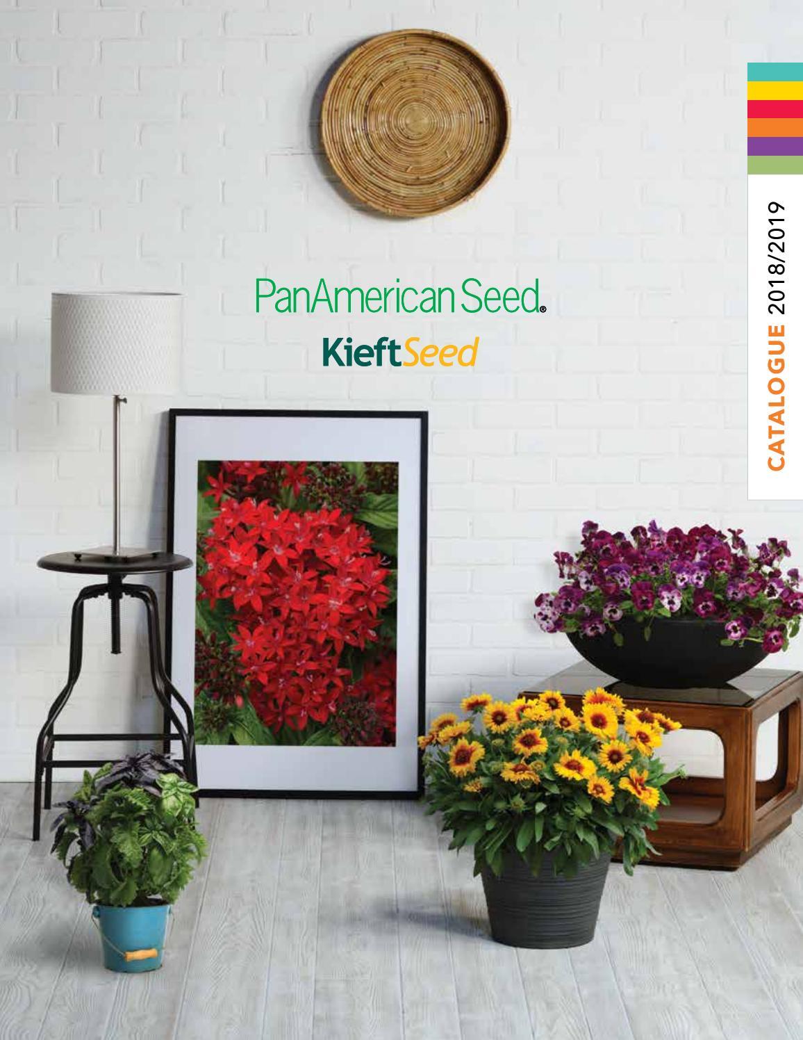 150 Semi//Seeds TABACCO Ornamentale Multicolor