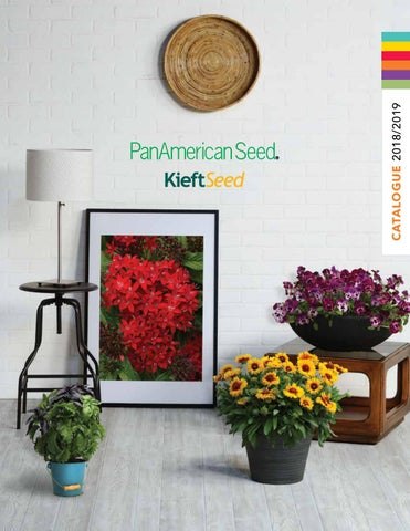 Panamerican Seed Kieft Seed 20182019 Catalogue By Panamerican Seed
