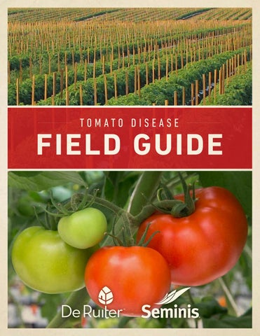 Tomato disease guide by Suresh L M - issuu