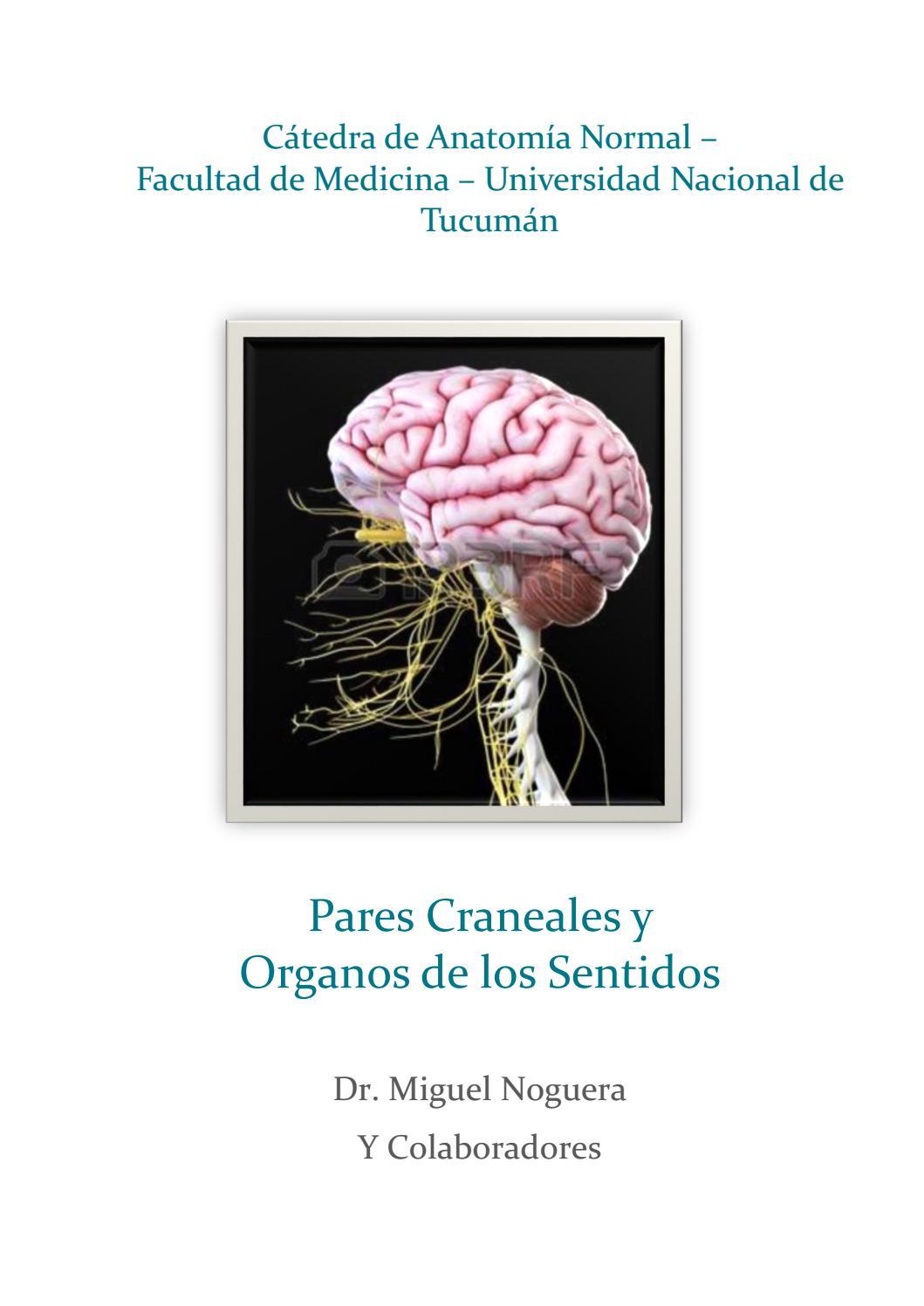 Pares Craneales y Organos de los sentidos by Miguel Angel Noguera ...