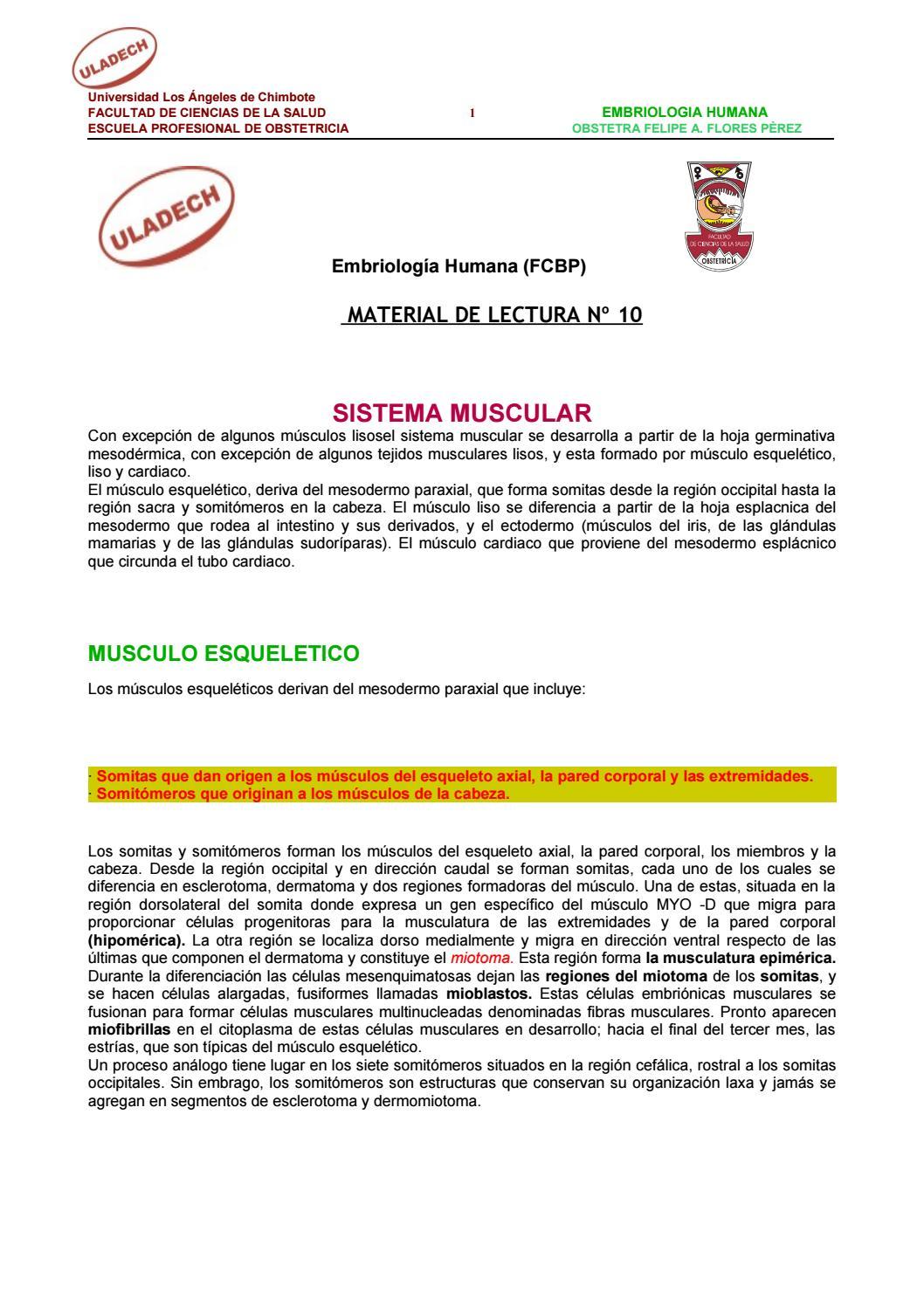 Sistema muscular y tegumentario by Yeferson Smith Peña Cahuas - issuu