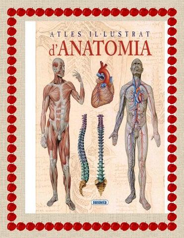 Tutoria 1 anatomia by Edgar27 - issuu