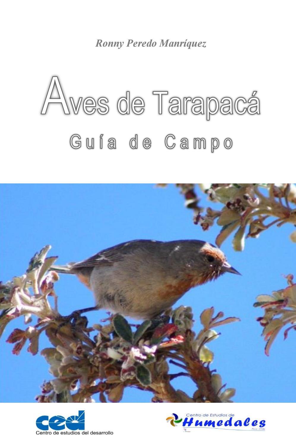 Guia aves de tarapacá r peredo by Esteban Espinoza Ansieta - issuu