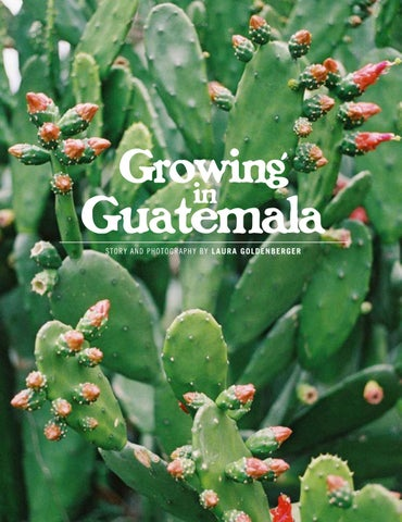 Page 26 of Growing in Guatemala