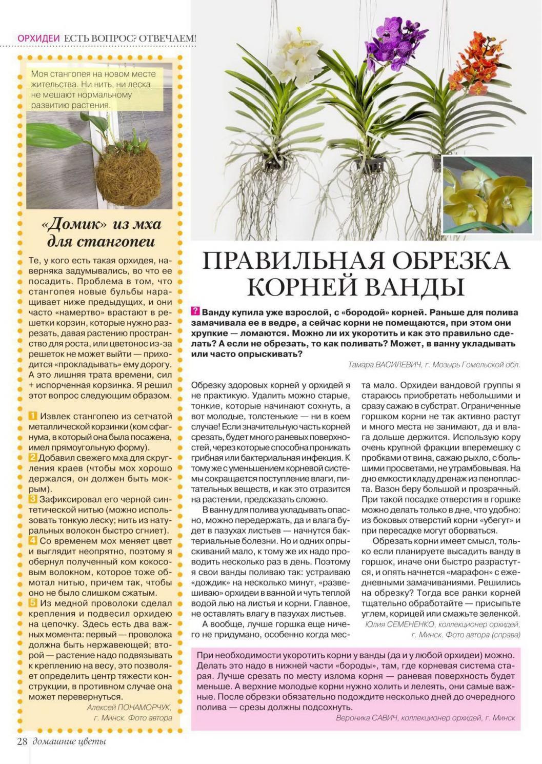 орхидея или фаленопсис - Страница 2 Page_28