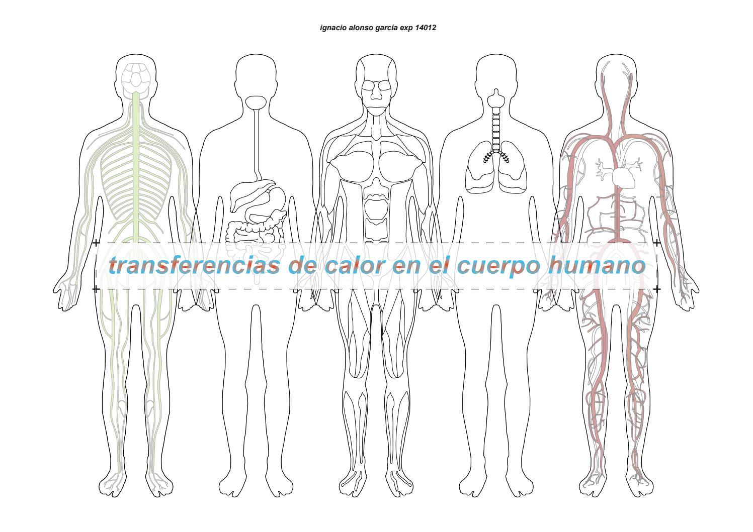 Investigación: transferencias de calor en el cuerpo humano by ...