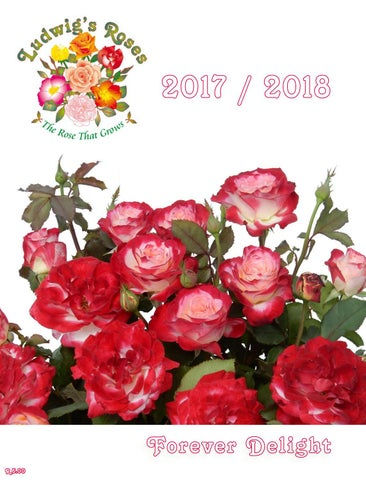 2017-18 Ludwig s Roses Catalogue by Anja Taschner - issuu eb40a39502a69